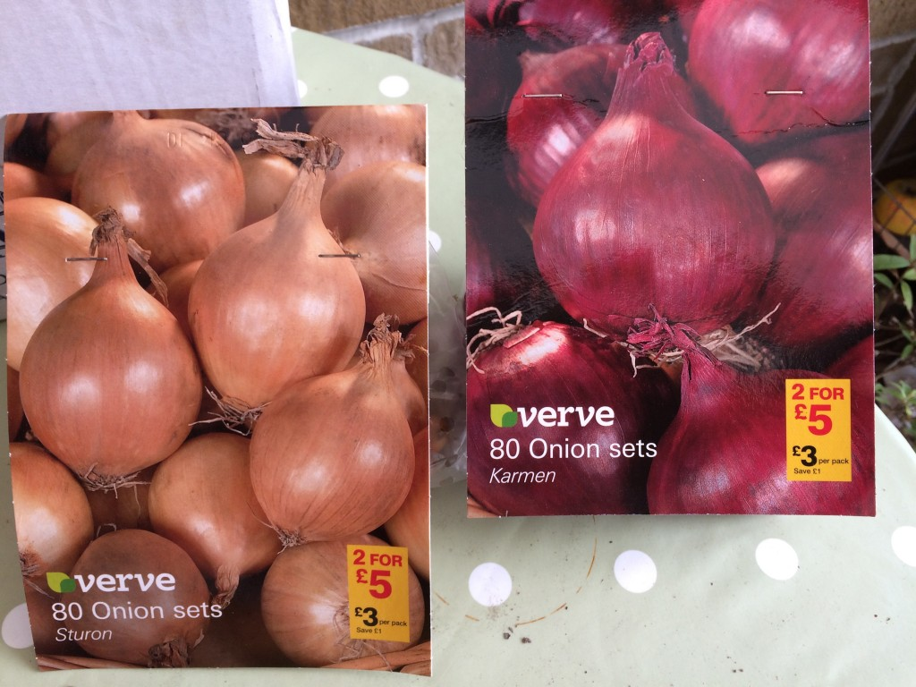 Onion sets, spring planting