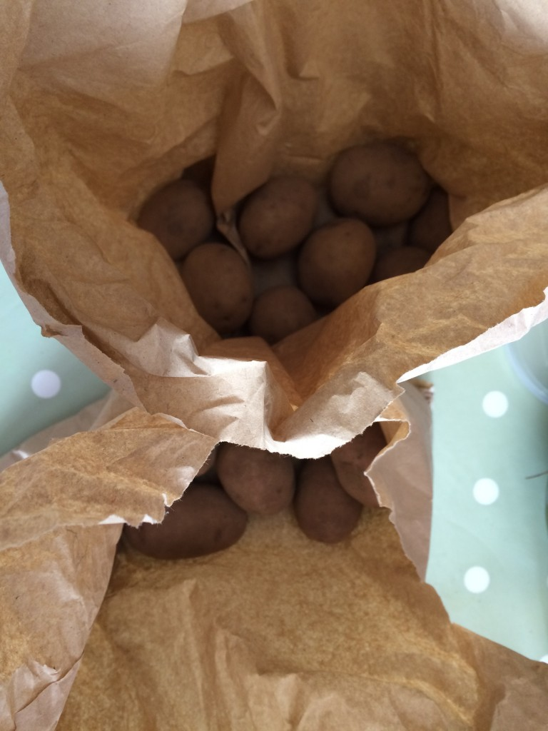 Potato tubers for the allotment