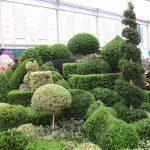 Topiary arts