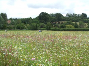 Field of Dreams, Barcroft Hall, Somerset