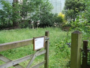 Meadow habitat, Wildlife Garden, Natural History Museum