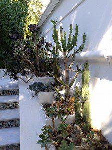 Exotic plants, Champfleuri, Cannes