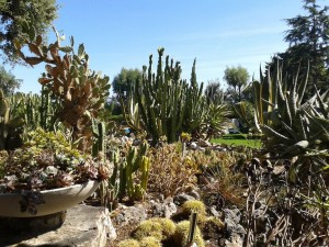 Exotic garden, Champfleuri, Cannes