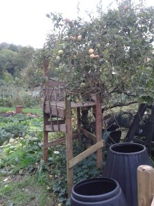 Allotment tree house