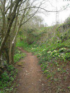 The primrose path...