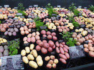 potatoes, display, floral pavilion, Chelsea Flower Show