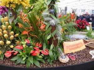 Granada, flower display, Chelsea Flower Show