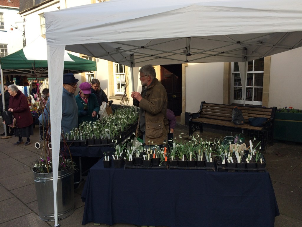 snowdop stall Elworthy Cottage Plants