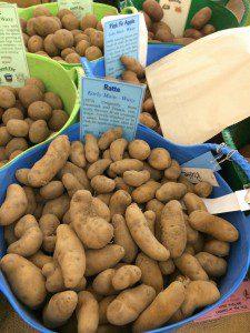 Ratte potatoes; potato day; allotment; vegetables