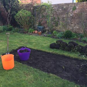 a lawned area being turned into a vegetable patch