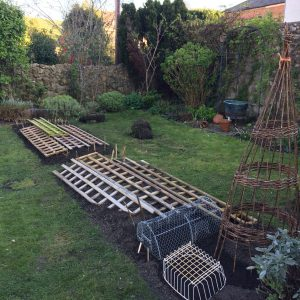 newly dug vegetable beds covered with trellis to protect against cats